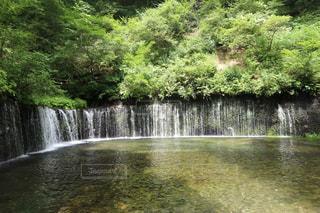 白糸の滝の写真・画像素材[1359855]