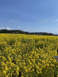 野原の花の写真・画像素材[4211573]