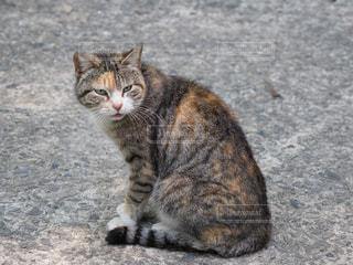 見返り猫の写真・画像素材[1360551]