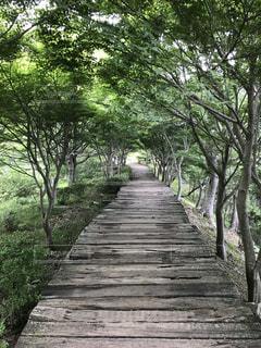 心地よい林の中の道の写真・画像素材[1400550]