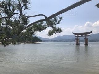 潮満ちる宮島大鳥居の写真・画像素材[2327575]