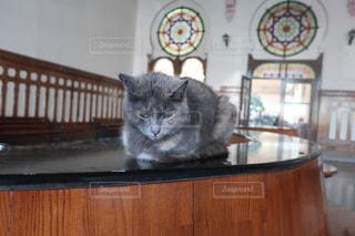 オリエントな番猫の写真・画像素材[2975068]