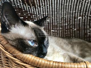 かごに横になっている猫の写真・画像素材[1375348]