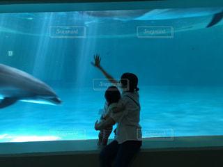 イルカと母と子の写真・画像素材[1362362]