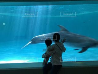 イルカと母と子の写真・画像素材[1362363]