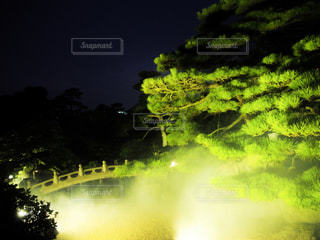 夜の日本庭園の写真・画像素材[1361206]