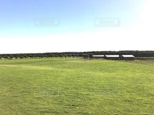 背景の木と大規模なグリーン フィールドの写真・画像素材[1361102]