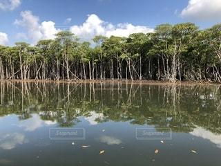木々 に囲まれた水の体の写真・画像素材[1366930]
