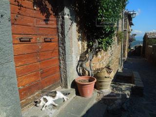 建物の上に座っている猫の写真・画像素材[1364024]