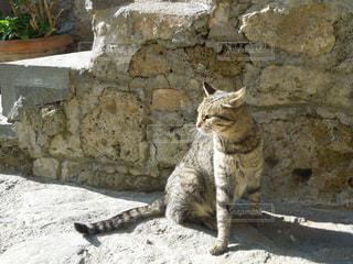 ひなたぼっこする猫の写真・画像素材[1364026]
