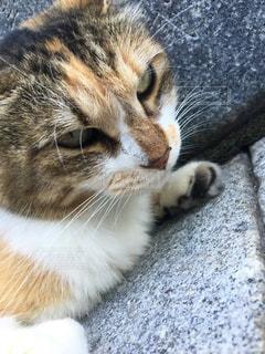 猫のアップの写真・画像素材[1364073]
