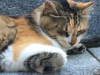 横になっている猫の写真・画像素材[1364074]