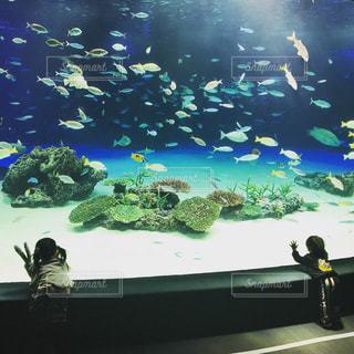 水族館!の写真・画像素材[1363328]