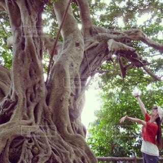 ガジュマルの木の下での写真・画像素材[1366139]