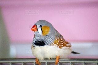 鳥の写真・画像素材[54458]