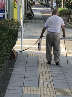 犬散歩中の老人の写真・画像素材[1362754]