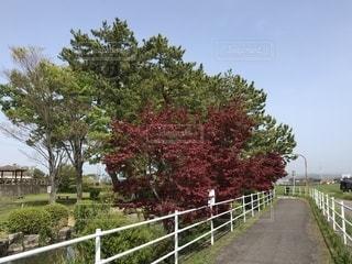 豊田自転車道の写真・画像素材[1363871]