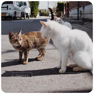 車の前に立っている猫の写真・画像素材[1367521]
