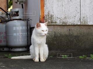 白い建物の上に座っている猫の写真・画像素材[1367522]