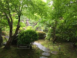公園の木の写真・画像素材[1365472]