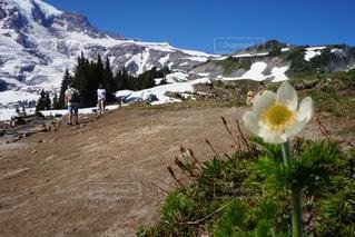 雪山と一輪の花の写真・画像素材[1364811]
