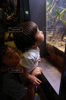 魚を眺める弟の写真・画像素材[1364897]
