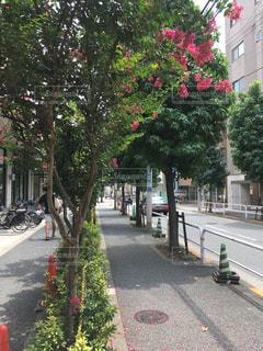 街の木が並ぶの写真・画像素材[1365025]