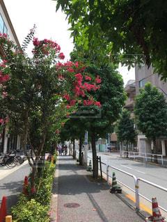 道の赤い花の写真・画像素材[1365029]