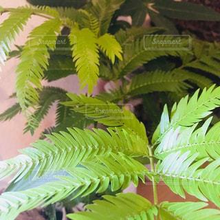近くの緑の植物をの写真・画像素材[1365142]