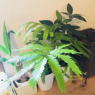 近くの植物のアップの写真・画像素材[1365143]
