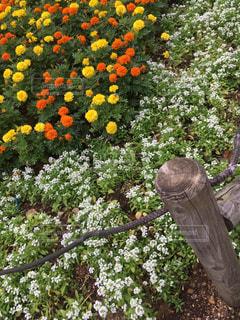 近くの花壇の写真・画像素材[1512473]