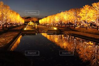 昭和記念公園 紅葉🍁のライトアップの写真・画像素材[1662952]