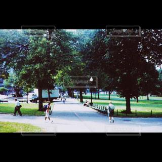 ボストンのとある公園の朝の写真・画像素材[1373050]