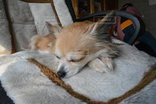 犬の写真・画像素材[152057]