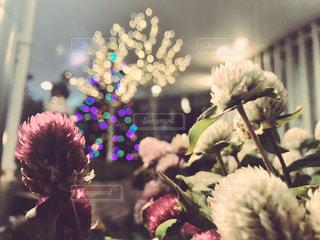聖夜の光の写真・画像素材[1366552]