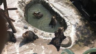 熊の写真・画像素材[1366382]