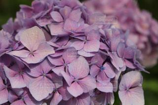 近くの花のアップの写真・画像素材[1366453]