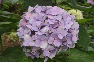 近くの花のアップの写真・画像素材[1366455]