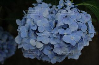 近くの花のアップの写真・画像素材[1366456]