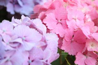 近くの花のアップの写真・画像素材[1366470]