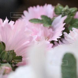 近くの花のアップの写真・画像素材[1366682]