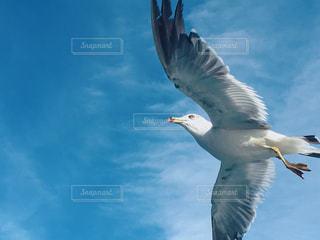 空を飛んでいる鳥の写真・画像素材[1371994]