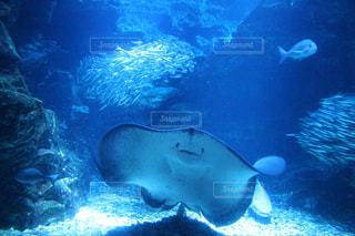 水面下を泳ぐ魚たちの写真・画像素材[1382112]