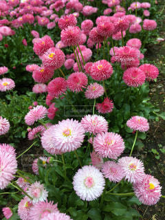 花の写真・画像素材[1366703]