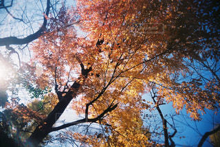 秋の日差しの写真・画像素材[1776996]