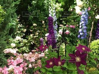 お花畑の写真・画像素材[43304]