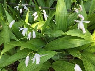 お花畑の写真・画像素材[43307]