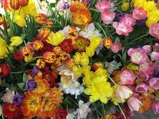 お花畑の写真・画像素材[43311]