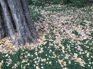秋の写真・画像素材[69476]