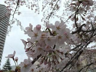 花の写真・画像素材[69732]